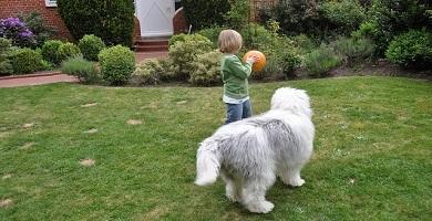 raza de perro Dogo de Burdeos y los niños