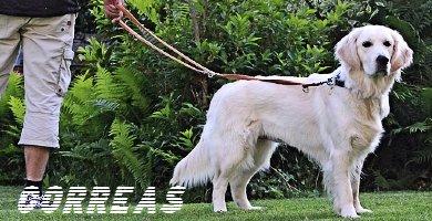 Correas para perros grandes accesorios