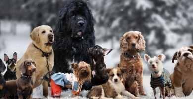 Tipos de Dogos